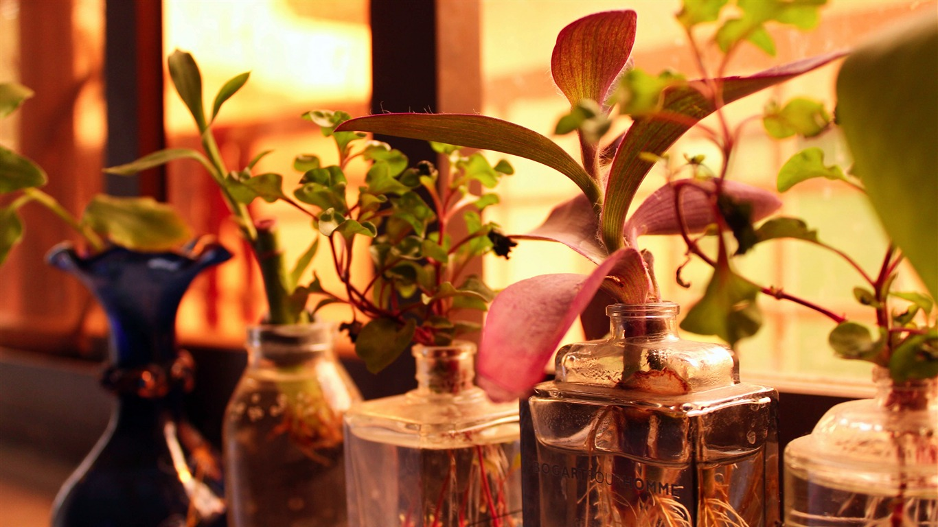 Window sill glass bottle plant close-up - 1366x768 wallpaper download