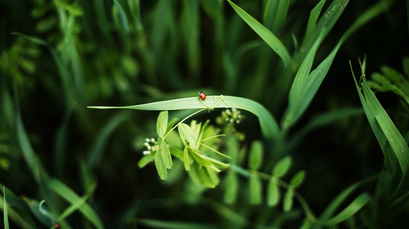 Ladybug_Grass_2021_Spring_Green_Plants_HD_Photo2021.2.20