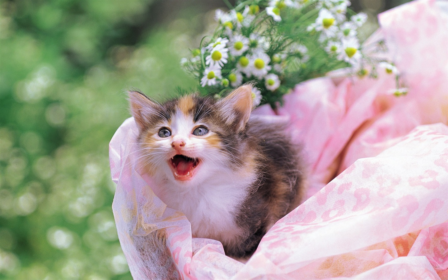 Cuddly kitten in flower basket - 1440x900 wallpaper download