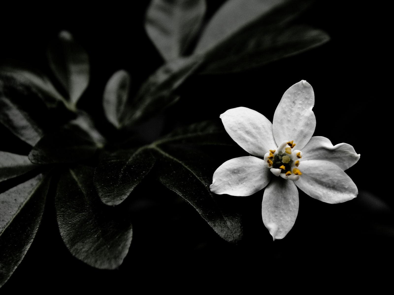 fond d'écran noir et blanc Aperçu | 10wallpaper.com