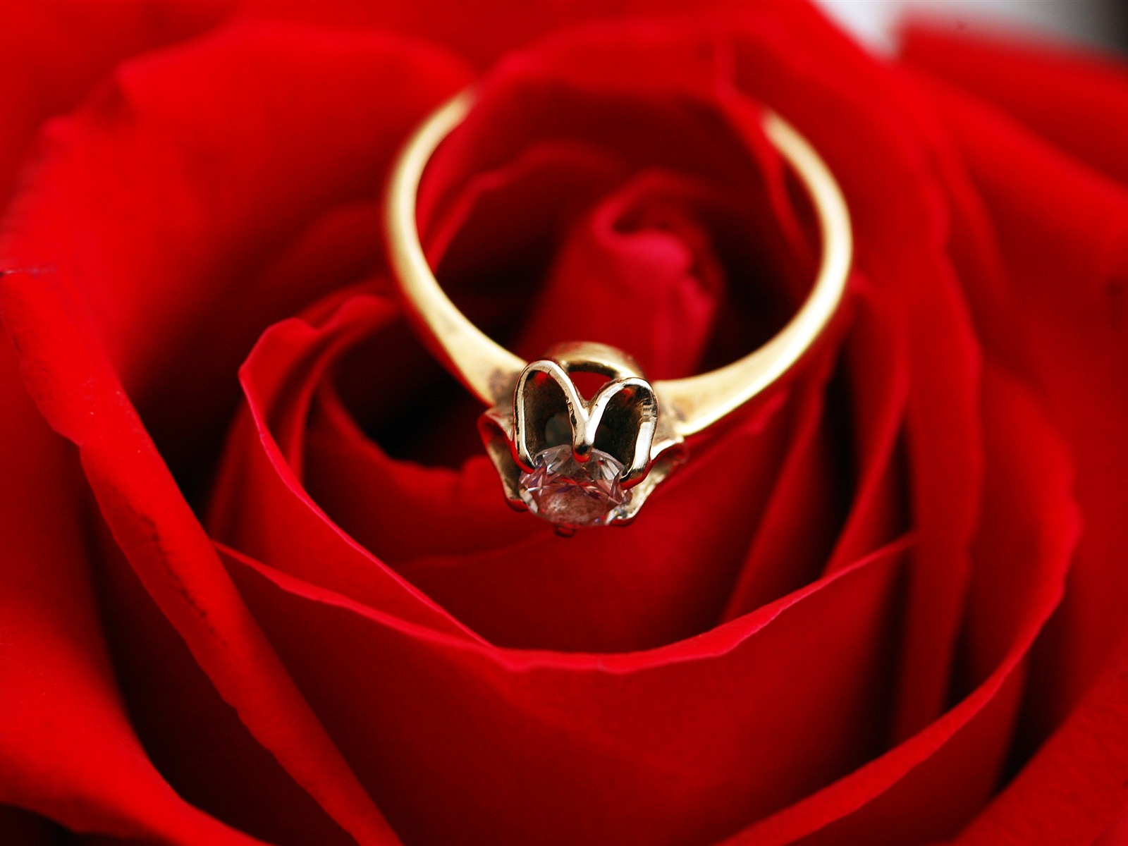 Romantic love golden ring red rose - 1600x1200 wallpaper download