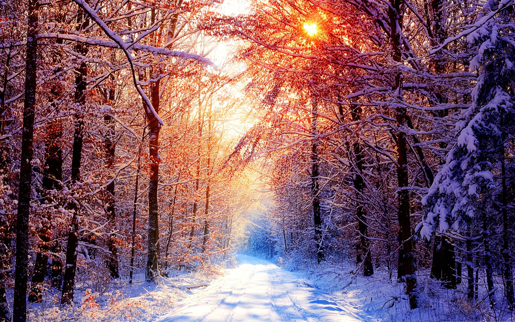 Winter Scenes-the Cold Winter Landscape Desktop-1680x1050