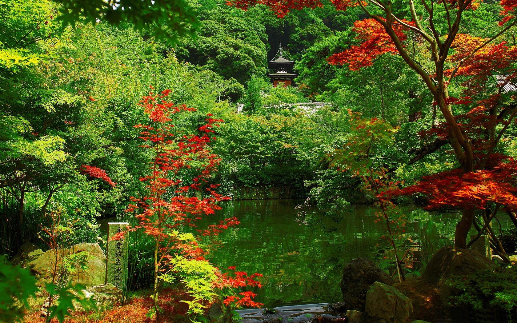 Beautiful garden wallpaper - 1680x1050 10wallpaper Com