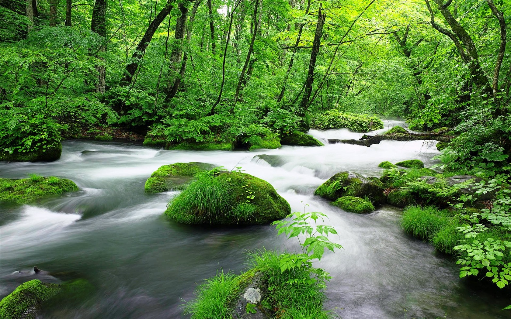 Green jungle streams-Windows 10 HD Wallpapers Preview ...