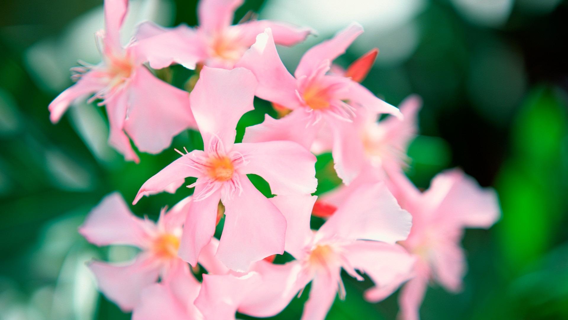 描述: 粉色的花-梦幻大溪地壁纸 当前壁纸尺寸: 1920 x 1080