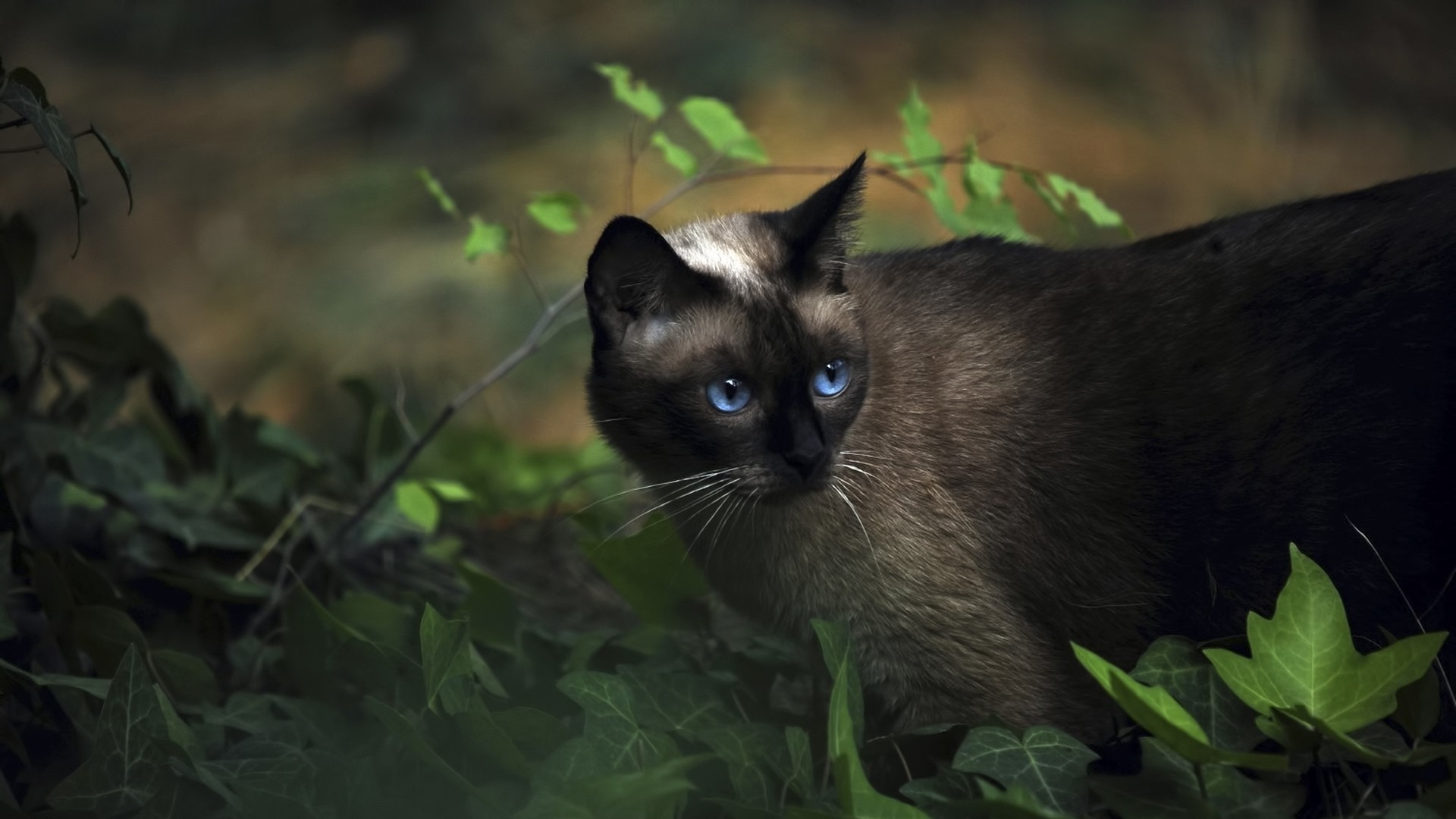 Black Cat With Blue Eyes Cute Little Kitty Cat Living Wallpaper Preview 10wallpaper Com