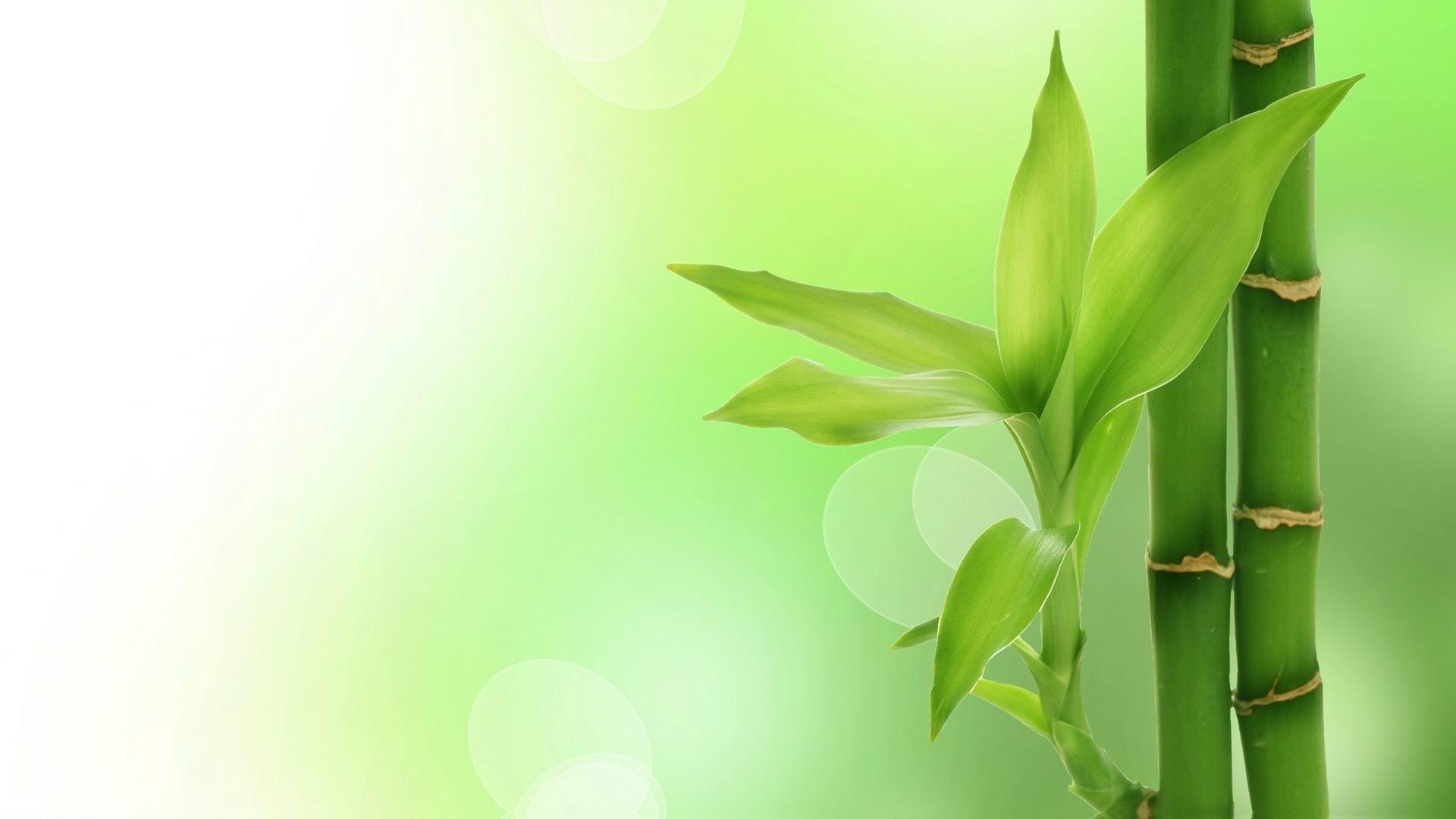 Bambou Vert-Papier Peint Plante Photographique Aperçu