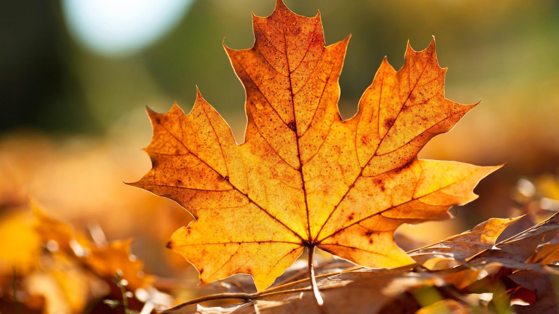 Feuille d 39 automne fond d 39 cran paysage d 39 automne 1920x1080 t l chargement - Images d automne gratuites ...