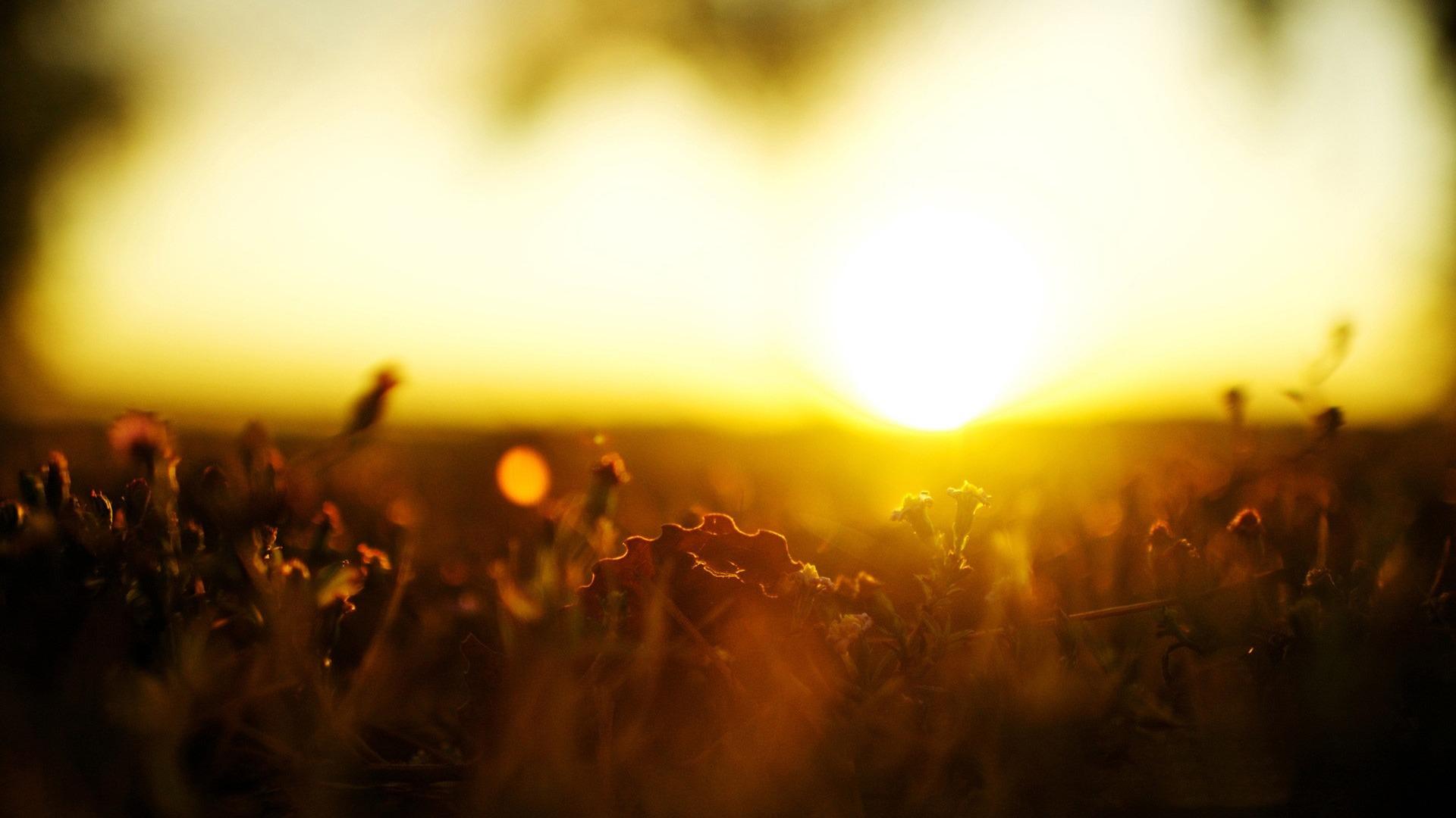 清晨唯美的阳光-植物壁纸 - 1920x1080 壁纸 下载图片