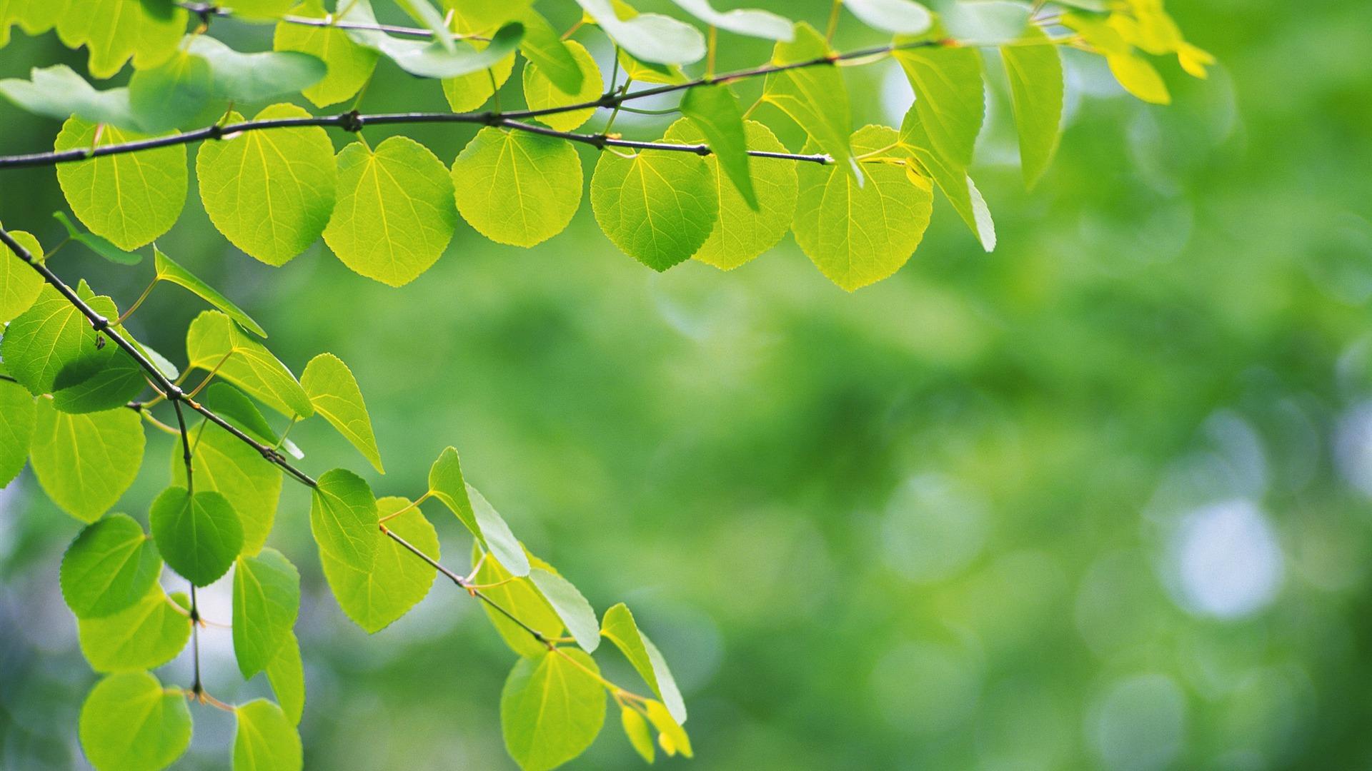 Fresh Green Leaves Theme