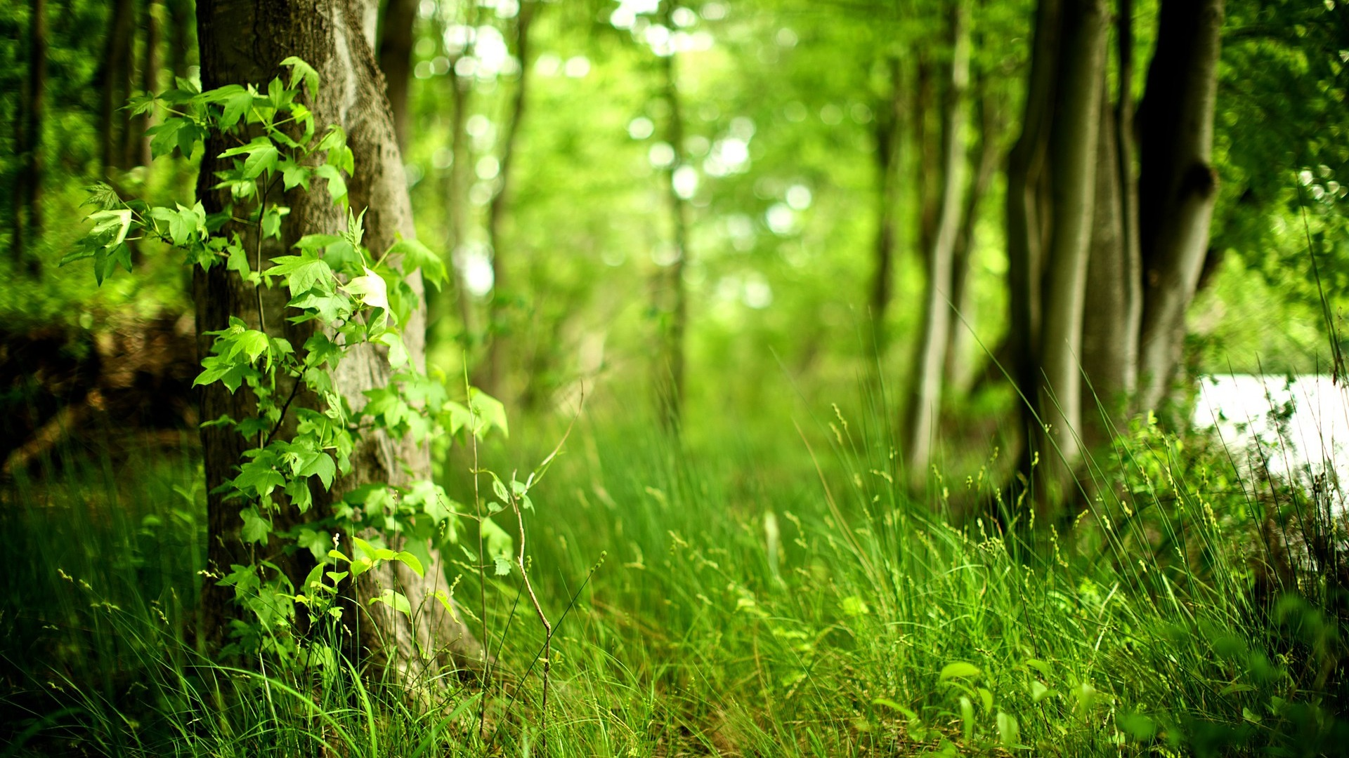 Green Woods Nature Photography Wallpaper Wallpaper