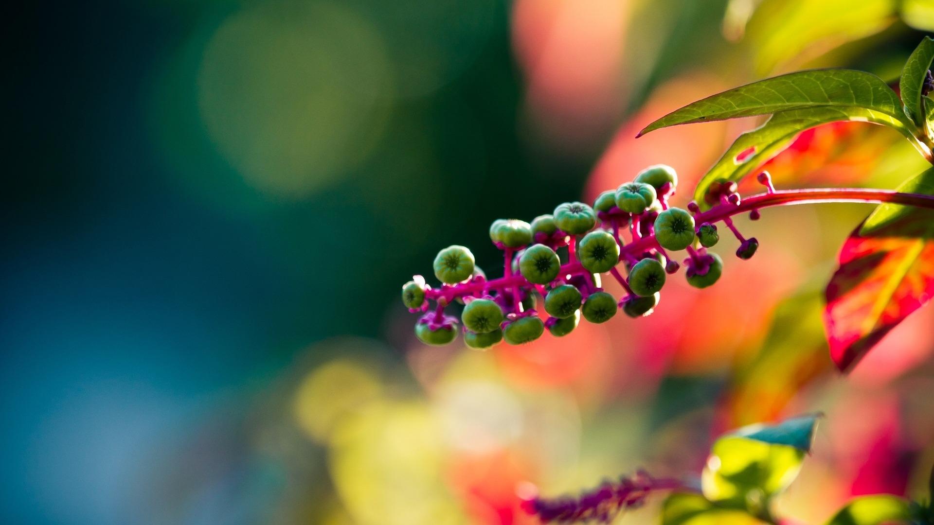 ボケ (植物)の画像 p1_33