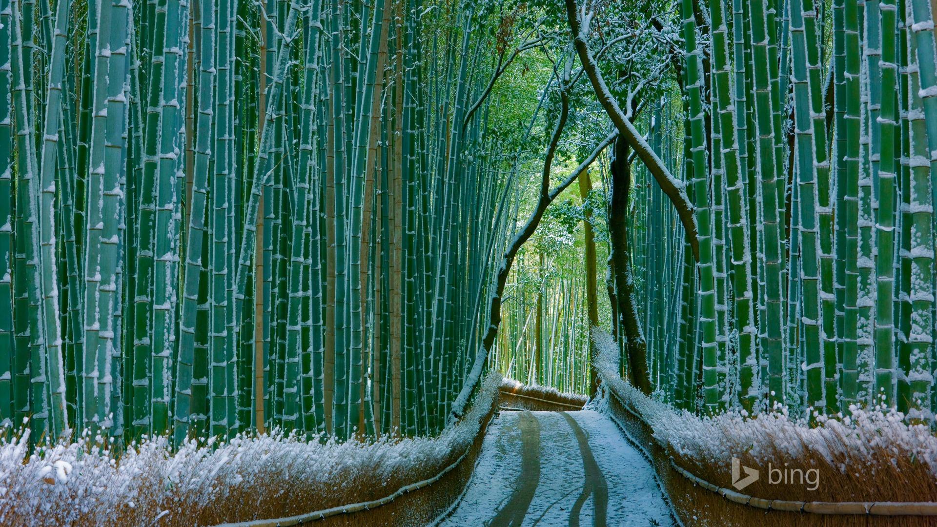 ... Bing Desktop Wallpaper - 1920x1080 wallpaper download -10wallpaper.com: 10wallpaper.com/down/Japan_Bamboo_Forest_Arashiyama-2016_Bing...