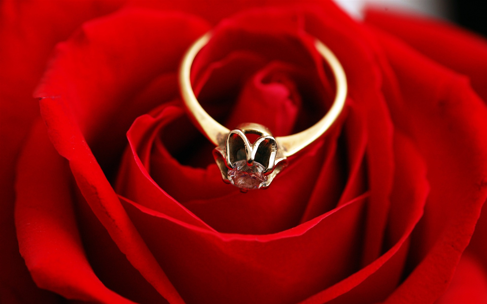 Romantic love golden ring red rose - 1920x1200 wallpaper download