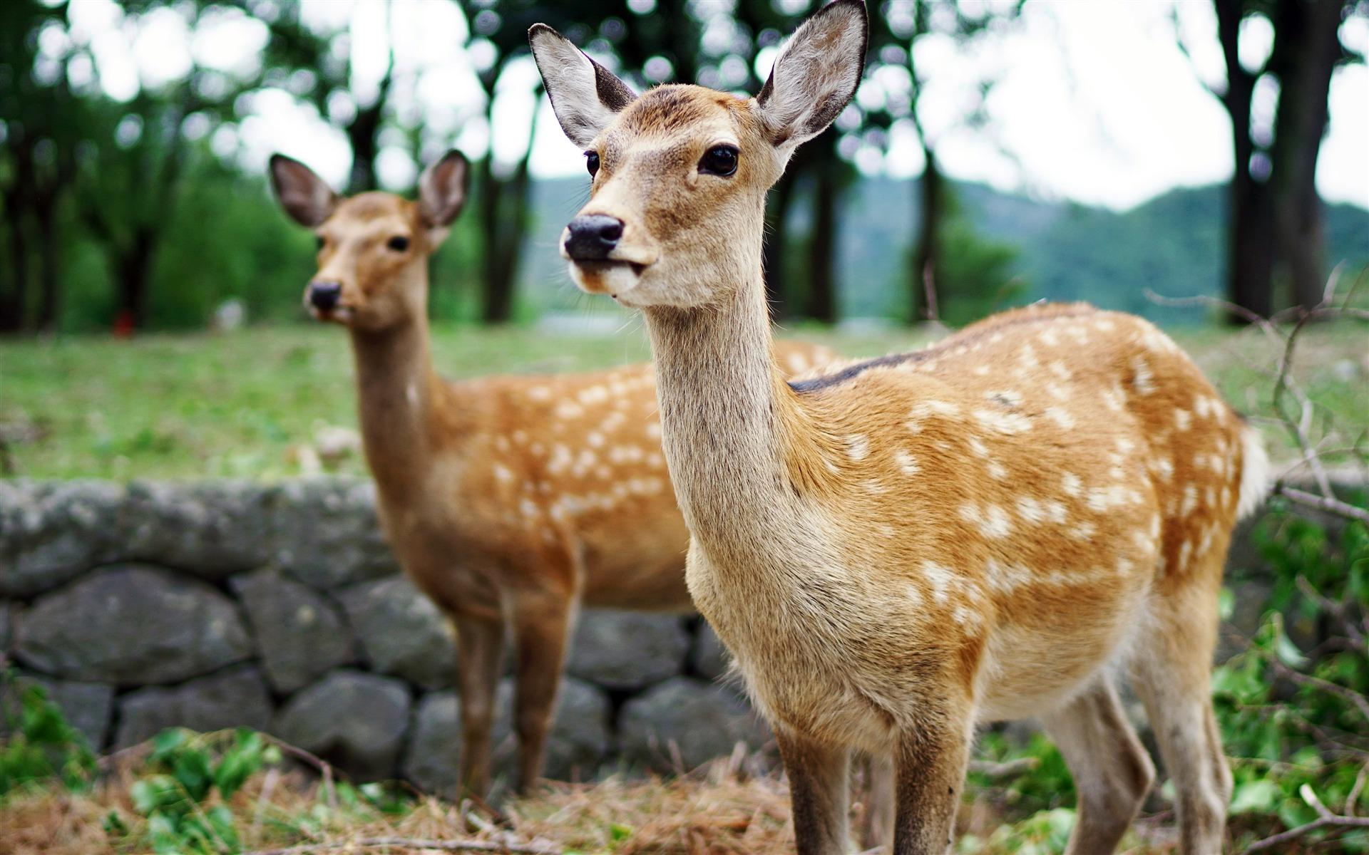 日本野生動物 (ヤマケイポケットガイド (24 ...