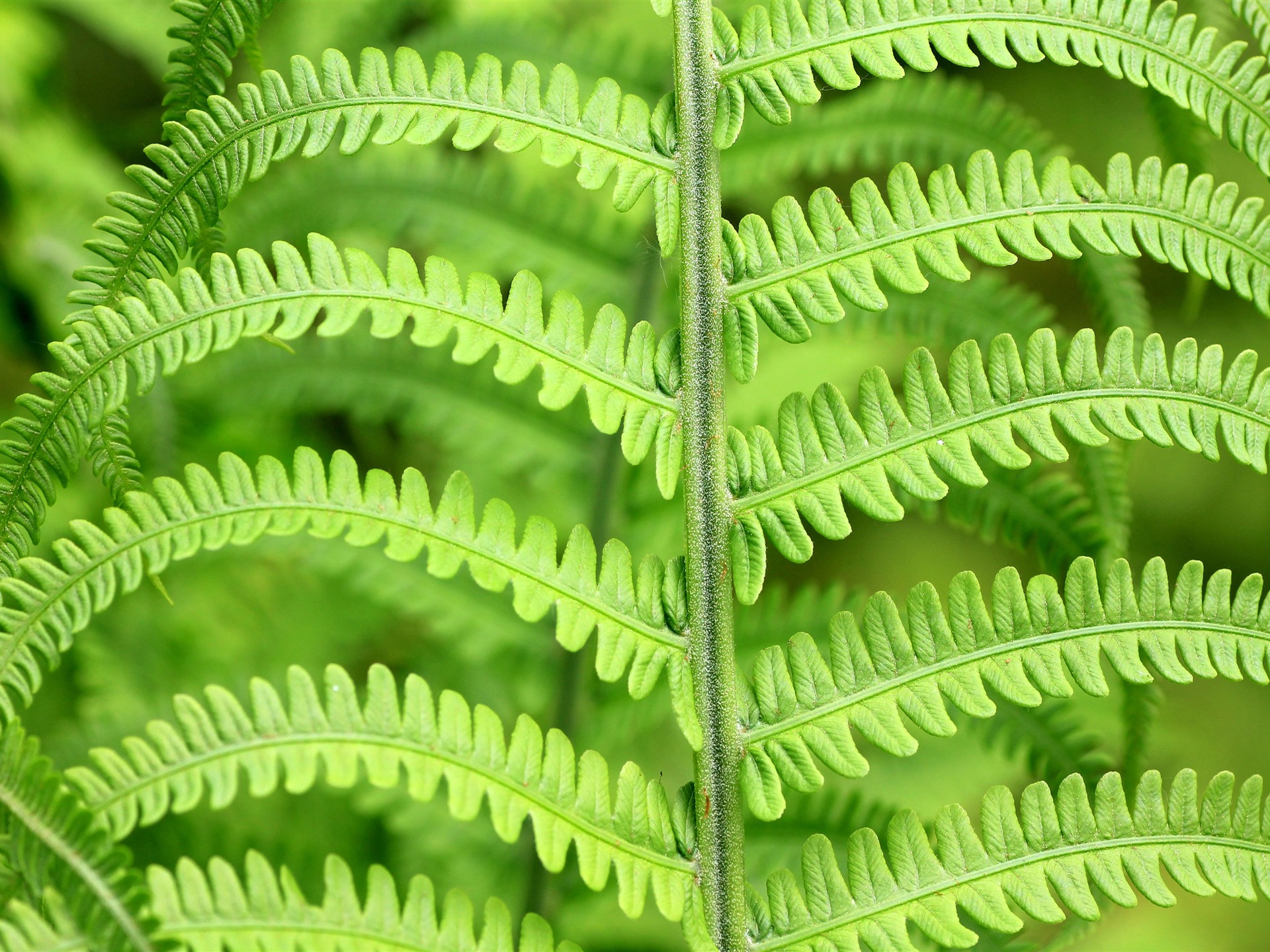 Spring forest green fern plant leaf - 1920x1440 wallpaper download