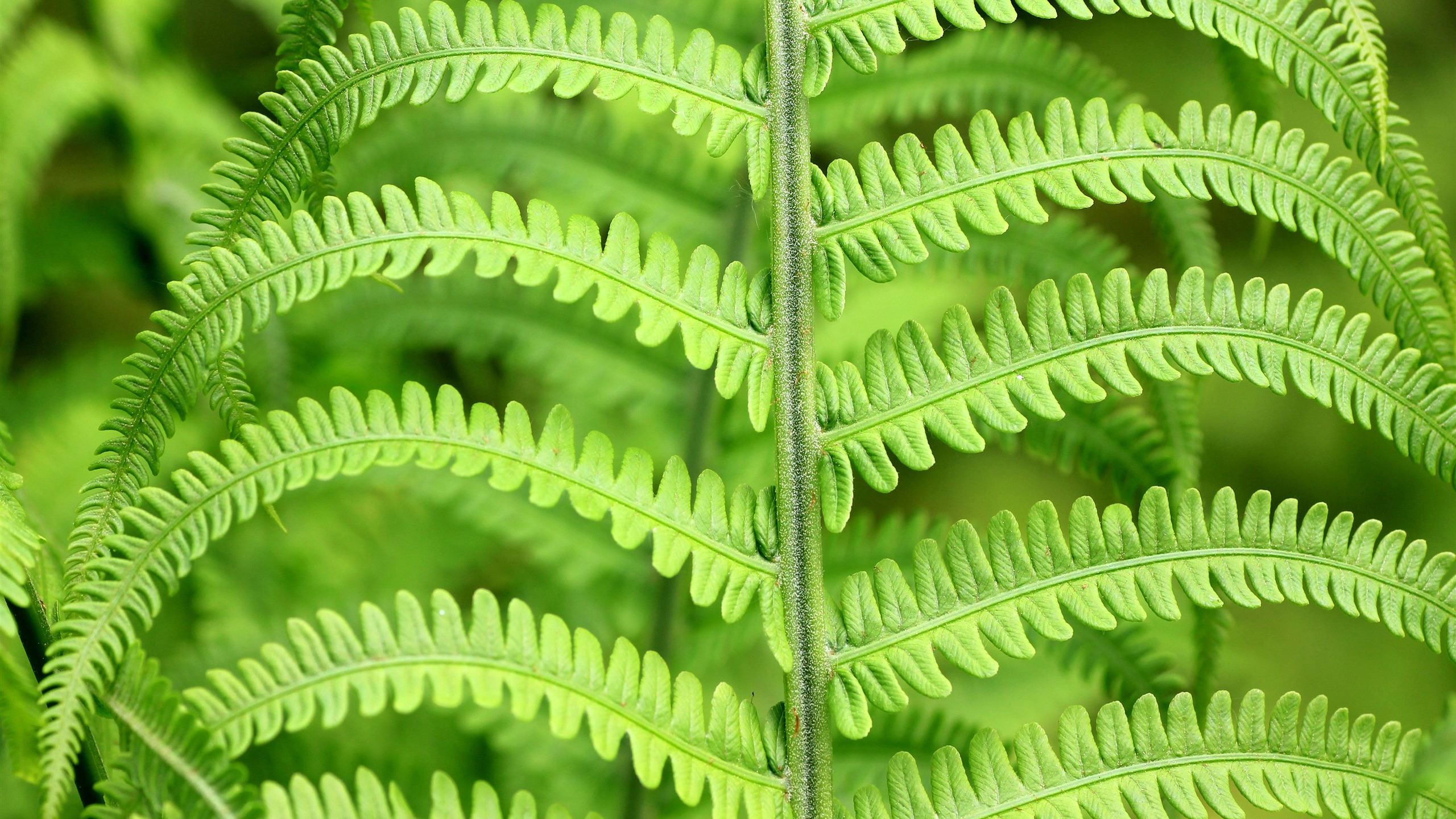 Spring forest green fern plant leaf - 2560x1440 wallpaper download