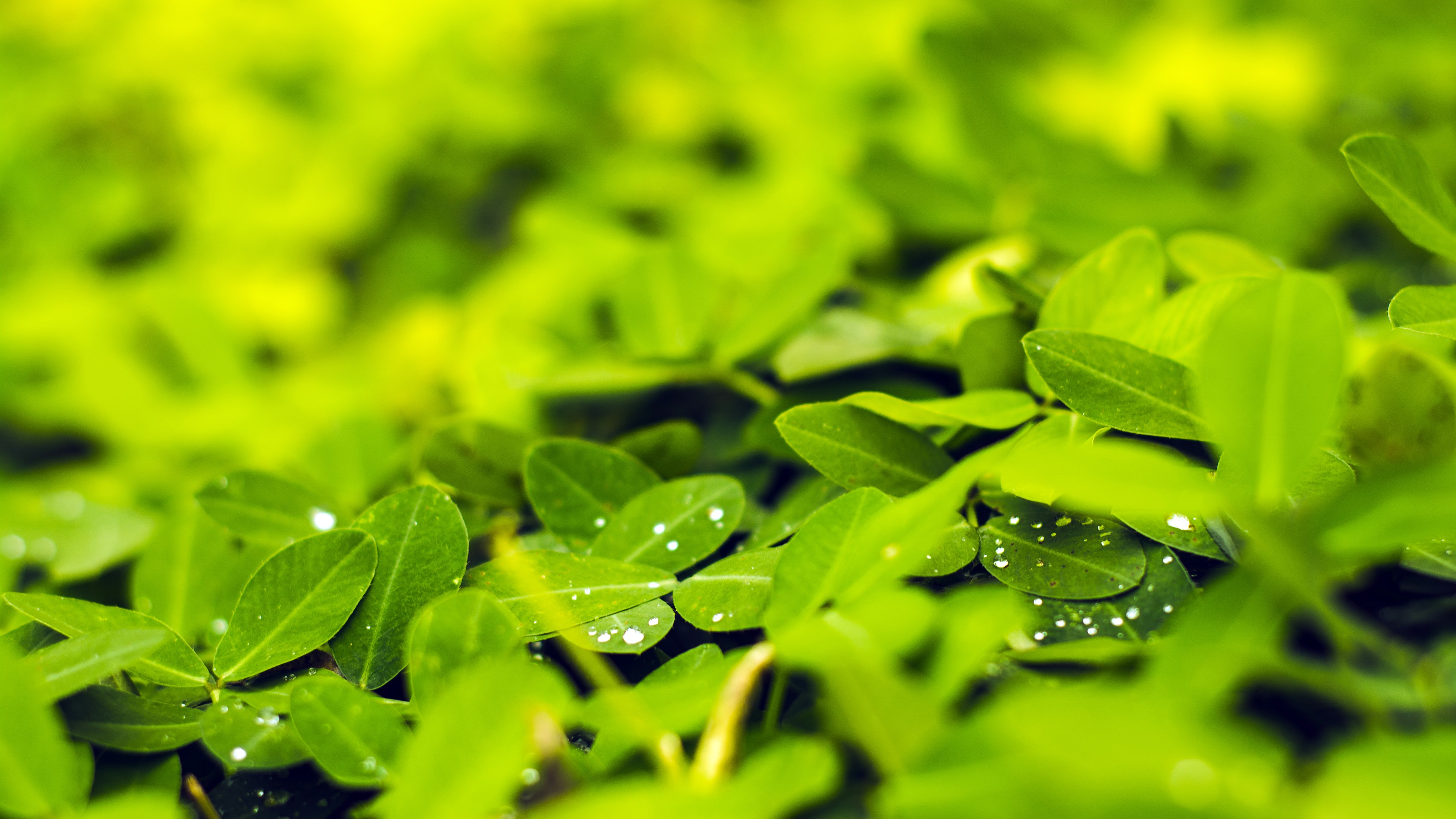 Spring fresh green leaves water droplets - 3840x2160 wallpaper download