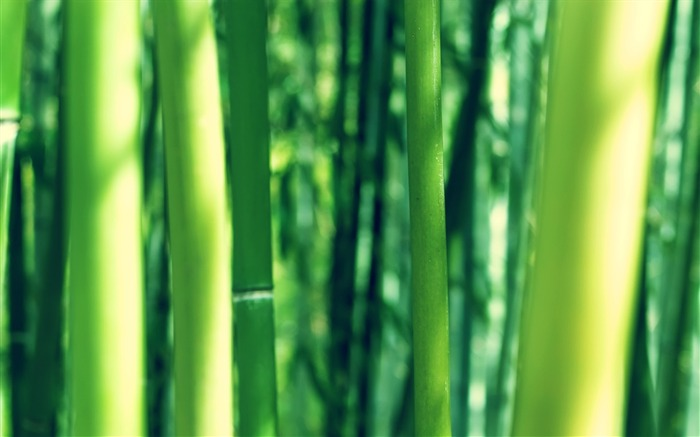 bamboo wallpaper Views:15283