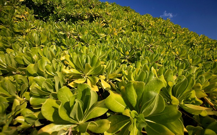 coastal plants Wallpapers Views:5865