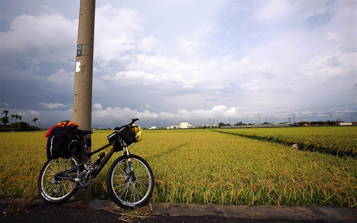 outskirts of paddy in Taitung Wallpaper Views:7173