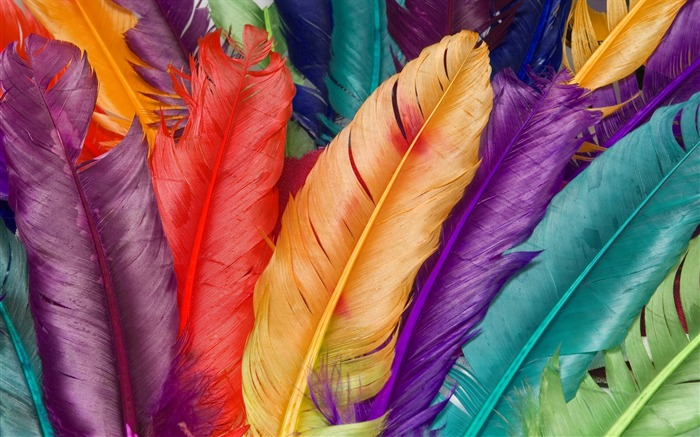 Colorful Feathers Dyed Feathers Views:11212