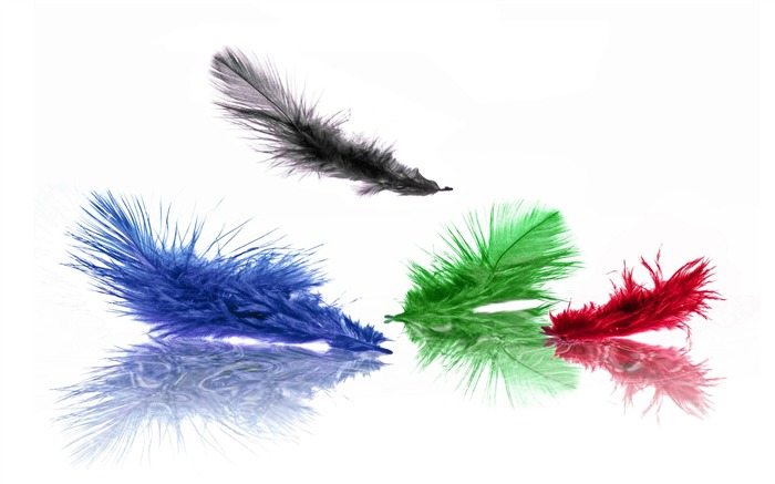 Creative Design Colored Feather Views:13840