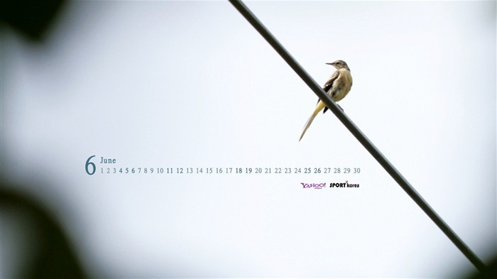 June Calendar bird wallpaper Views:4013