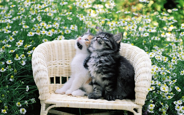 Kitten Pal Tow Cuddly Kittens Wallpaper Views:10183