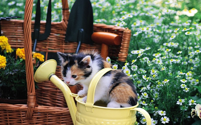 Kitten gardener Baby Kittens Wallpaper Views:9094