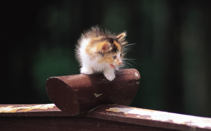 Little baby kitten outdoor fun Views:6055