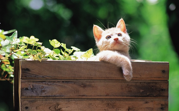 Little kitten in wooden box Lovely Kittens Wallpaper Views:4600