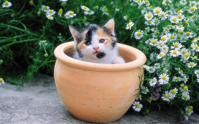 Lovely kitten in flower pot Views:5763