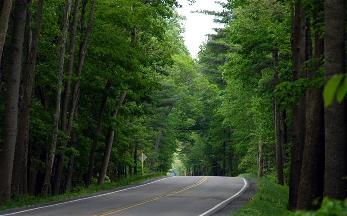 Photo Country Road Lined with trees Views:9972