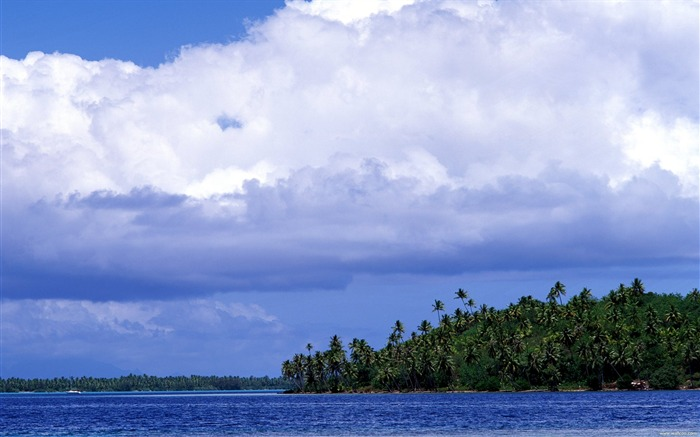 Tahiti coconut island wallpaper Views:4552