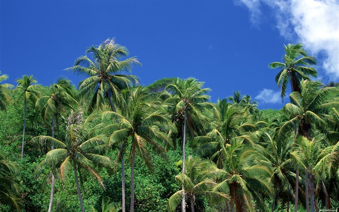 green coconut wallpaper Views:9639