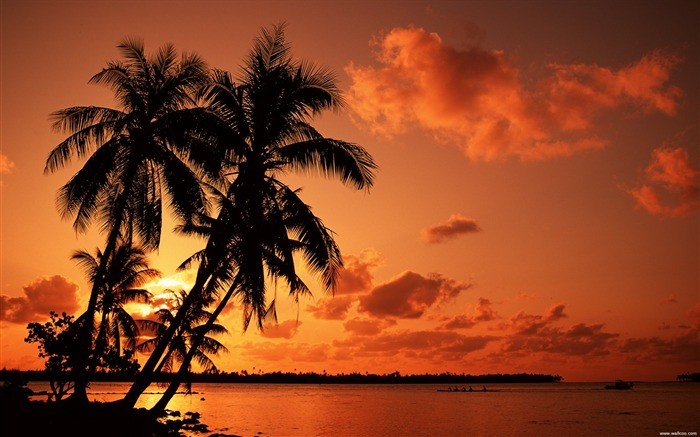 red sunset beach under palm trees wallpaper Views:79160