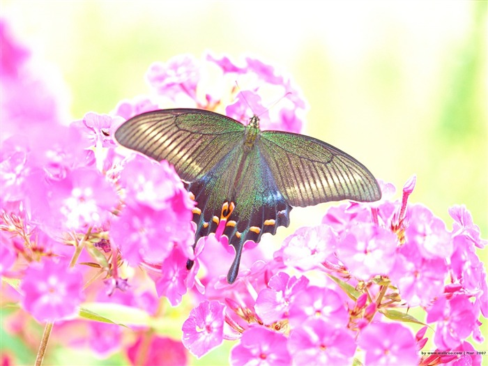 Butterfly and Flowers in Sunshine Picture Views:5119