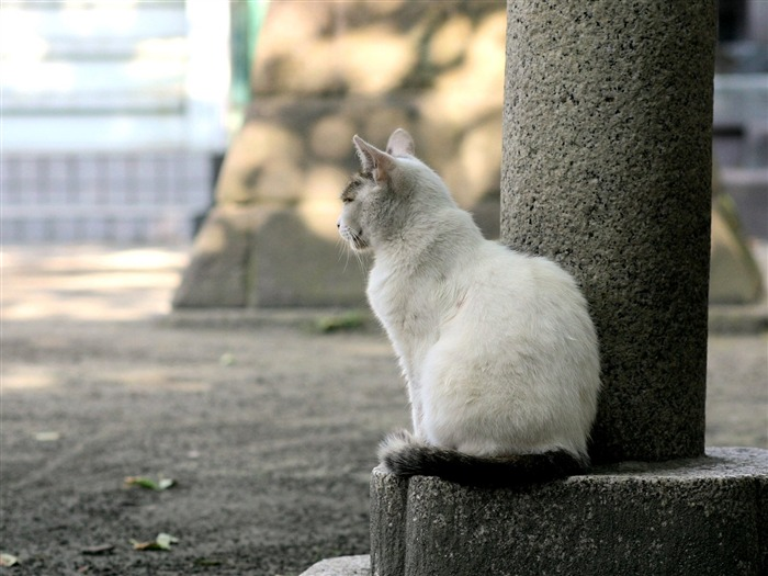 Cat leisure time - Snapshot of cats in temples life 22 Views:3621