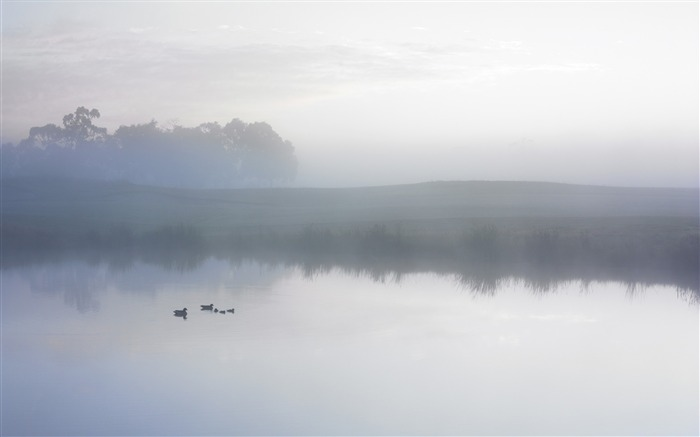 Ducks on a Misty Pond wallpaper Views:20319