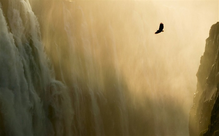 Eagle and Waterfall Wallpaper Views:26051