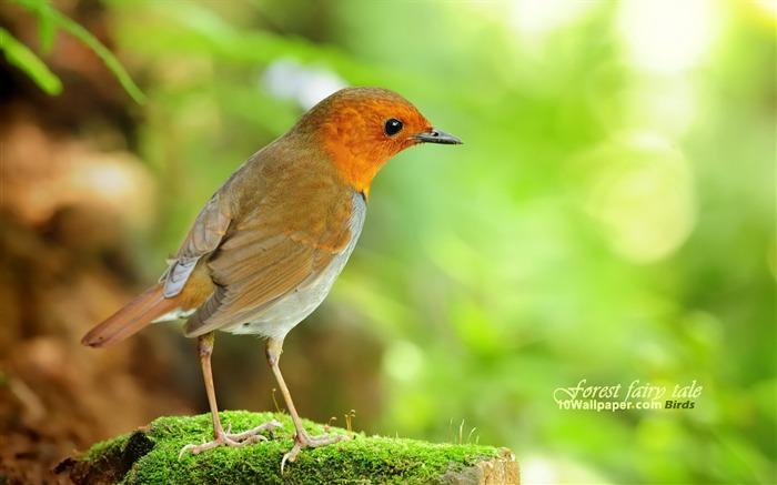 Woods elf - Spring cute bird wallpaper - first series ...