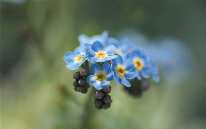 Little Blue Flowers Wild Flowers photography Picture Views:4576