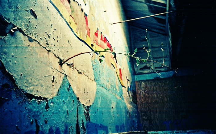 New Life in Decayed Wall Beautiful Lomography Views:4117