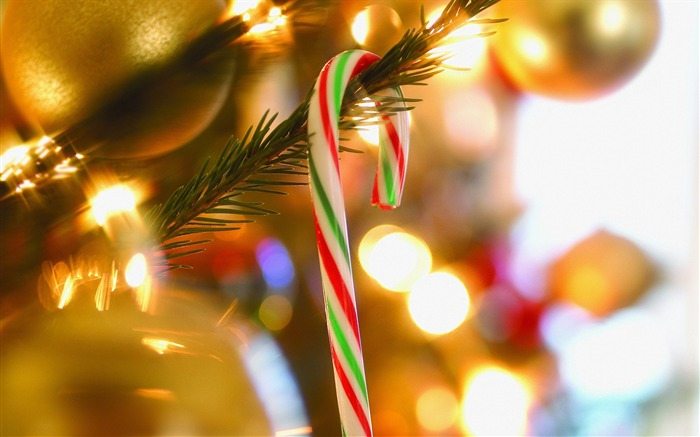 Photo- Candy Cane on Christmas Tree Views:16746