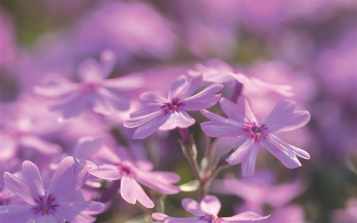 Pink Flowers Wild Flowers photography Picture Views:4080