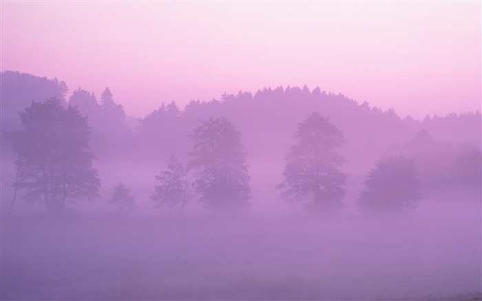 Pink Forest wallpaper Views:25507