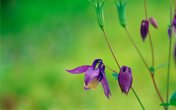 Purple Flowers Wild Flower Photography Picture 01 Views:5807