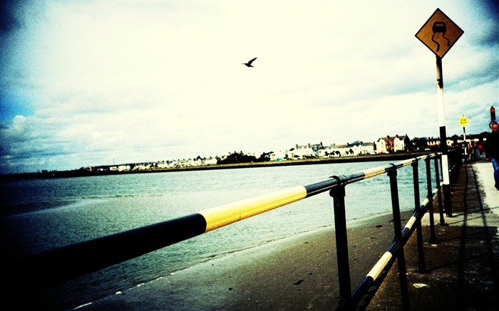 Seagul in sky  Beautiful Lomo Lomography Views:5716
