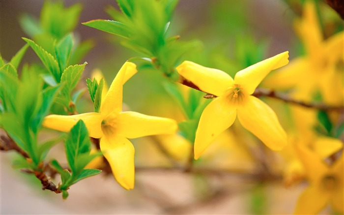 Small Yellow Flowers Wild Flower Photography Picture Views:4446